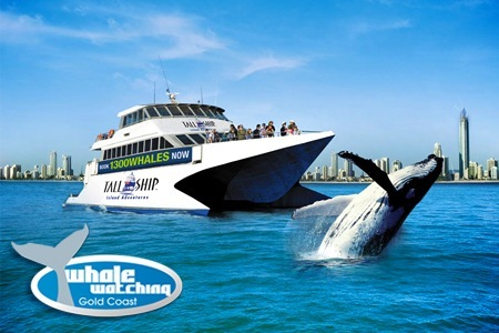 whale watching deals gold coast