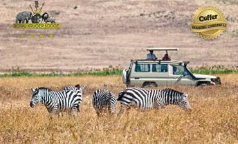 50 Off Royal Kruger Lodge Deals Reviews Coupons Discounts