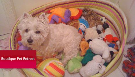50 Off Boutique Pet Retreat Deals Reviews Coupons Discounts
